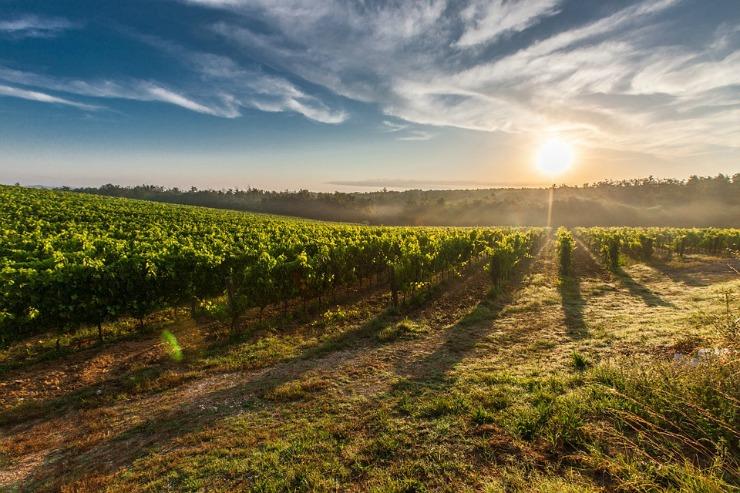 Wine Tour nel Chianti da Firenze