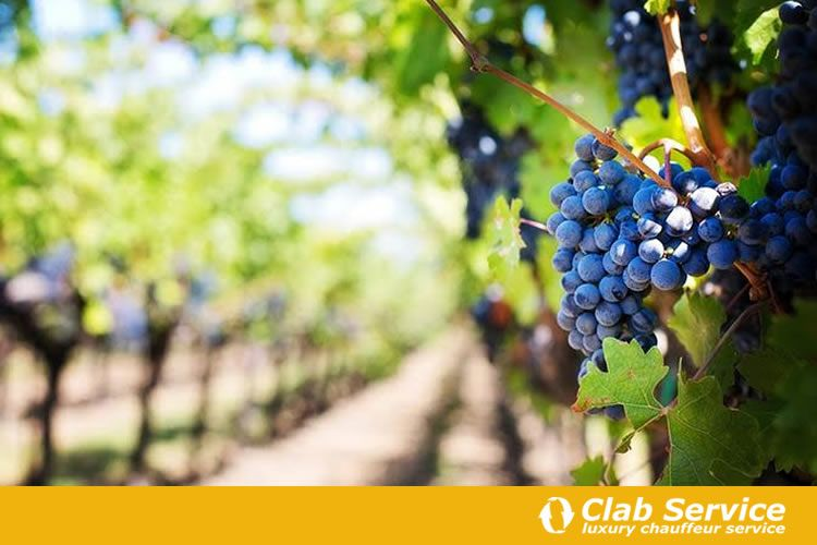 Itinerari-del-vino-in-Toscana