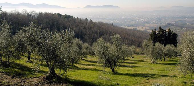 Olivi Lucca